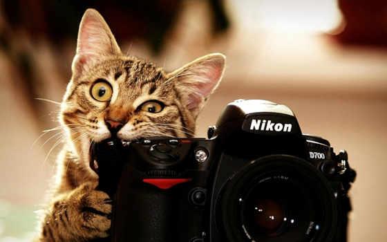 фотоаппарат, цветы, ткани