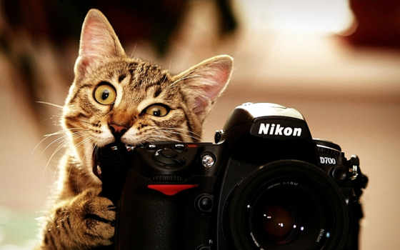 фотоаппарат, цветы, ткани, кот, choose,