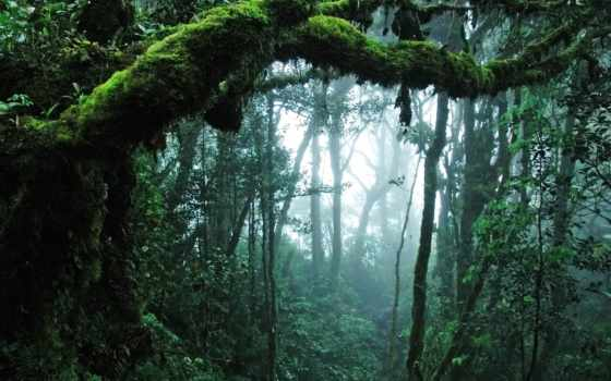 malaysia, taman, negara, park, national, ди, vẫn, hutan, lập, gia, quốc,