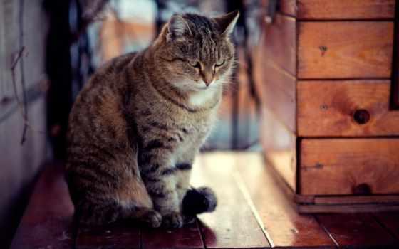 сидит, кот, очень, снег, serious, ну, кошки, разрешениях, разных,