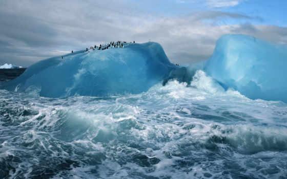 glacier, ocean, пингвины