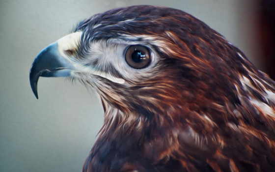 птиц, животных, terrano, nissan, перепелятник, рисунки, animals, birds, sokolov,