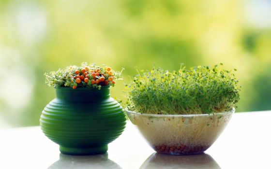 изображение, share, почти, мэри, домашних, условиях, landscaping, проращивание, фасоли, маш,