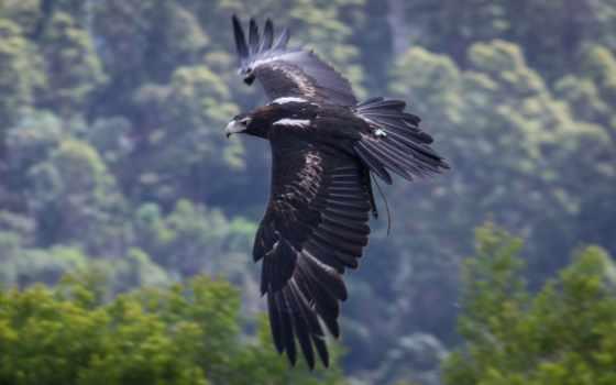 птиц, хищных, птицы