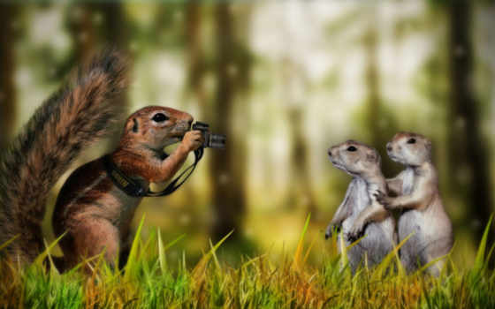 funny, animals, creative, pictures, nature, photo, тогда, found, with, photography, юмор, posted, grappige, squirrel, taking, их,