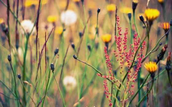 растительность, цветы, природа