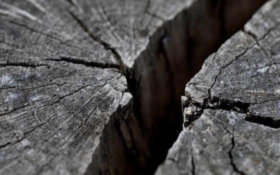 трещина, картинка, full, дерево,
