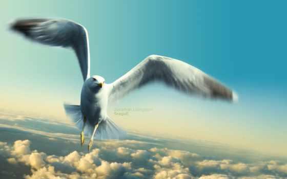 чайка, seagull, ливингстон, jonathan, имени,