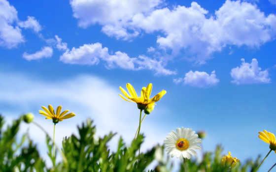 цветы, поле, небо, весна, ромашка, коровка, god,