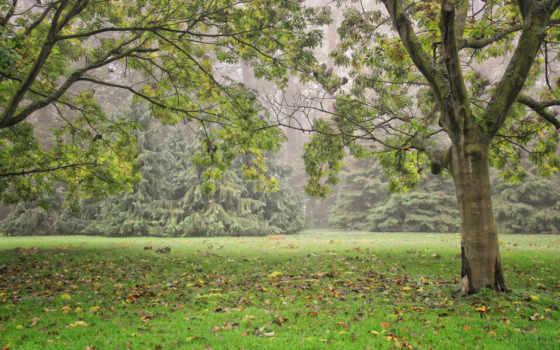 природа, park, паркс, desktop, high, фон, бельгия, trees, meise,