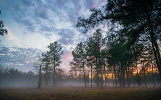 лес, туман Фон № 102888 разрешение 2560x1600