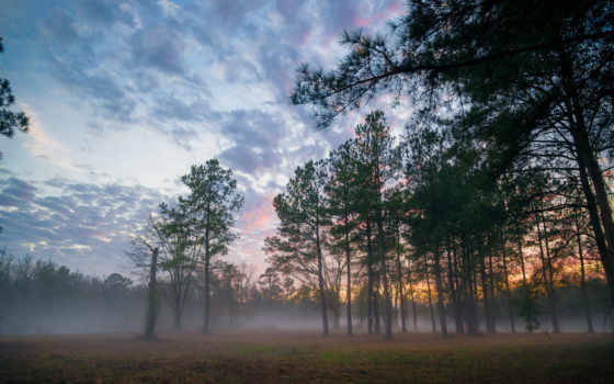 лес, туман,