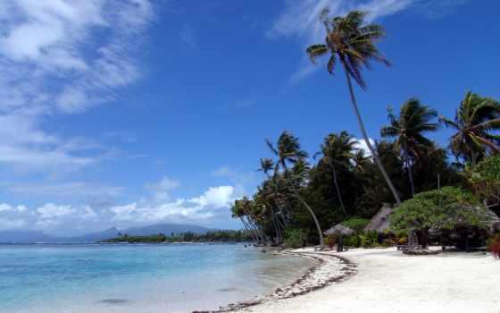 пляж, пальмы, песок