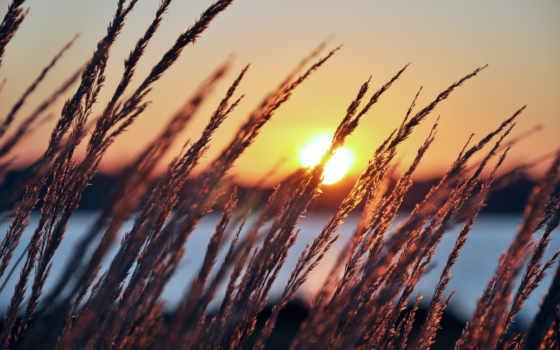 раннее, утро, рассвет, sun, summer, колосья, трава, года, природа, восход, восходящее,