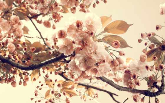 vintage, цветы, листва, природа, алиса, wonderland, ветки, лепестки,