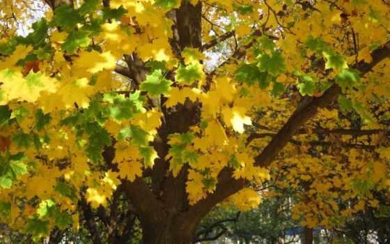 осень, trees, листва, ах, прекрасна, компьютер, video, красивые, mix,