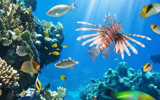 coral, ocean, underwater