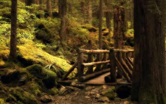 лес, mysterious, new, изображение, путь, jungle, природа,