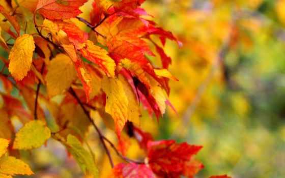 листья, макро