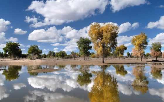 деревя, за, небо