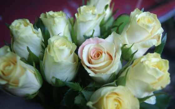 розы, белые, букет