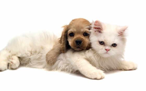 zhivotnye, животных, кошки Фон № 113206 разрешение 1680x1050