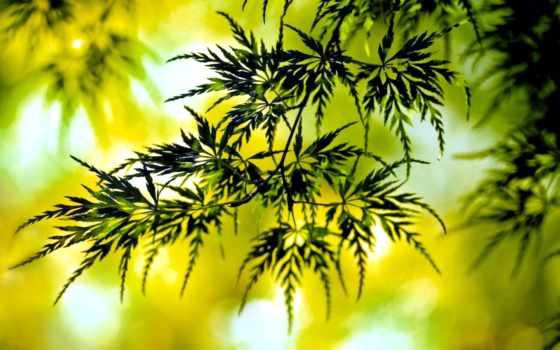 листва, зелёный, растение, веточка,