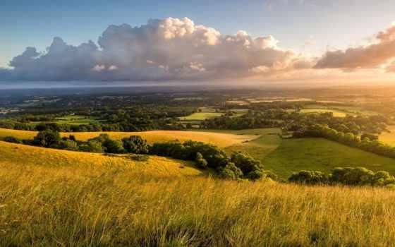 summer, margin, трава, рассвет, trees, утро, собака, великобритания, вездеход, сельская,