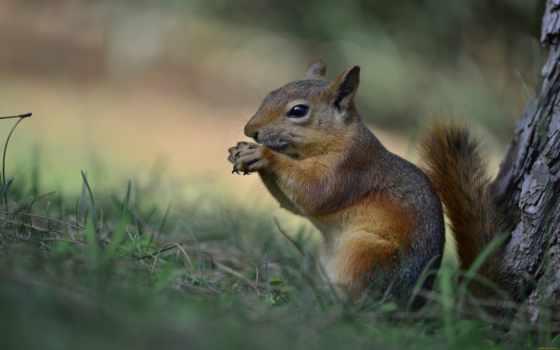 squirrels, белки, milo,