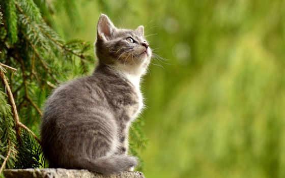 gato, кот, меня, del, магия, омск