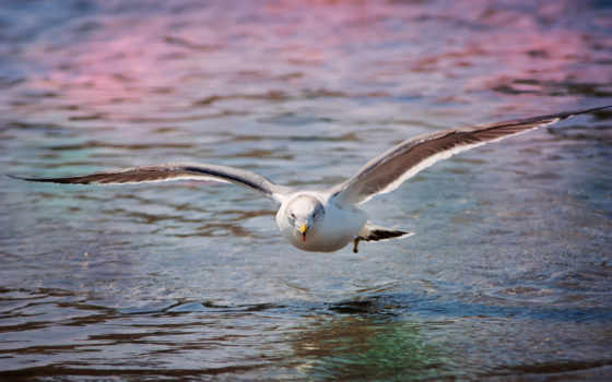 чайка, more, птица, просмотреть,