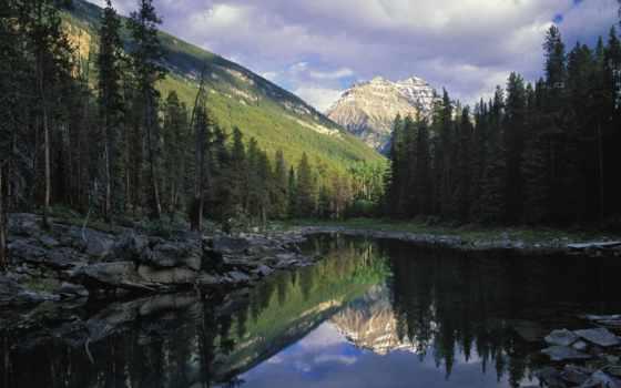 леса, канадский, national, канадского, park, мрачная, красавица, jasper, канады, обычные,