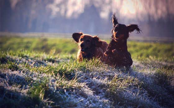 dachshund, таксы, зооклубе, собака, фото, зооклуб, картинка,