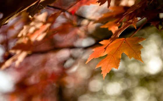 осень, макро, лист, оранжевый, листва, краски, time,