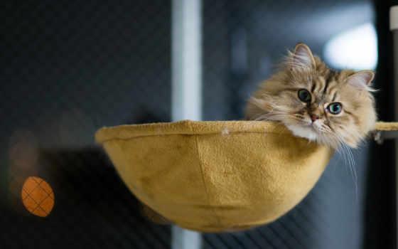кот в лежаке