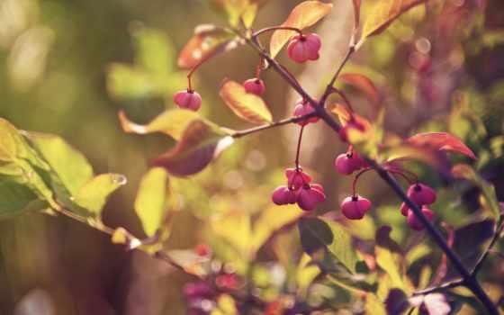 листья, блики