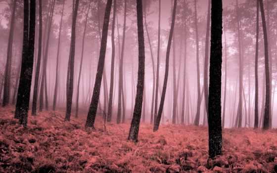 fondos, descargar, pantalla, деревя, widescreen, туман, gratis, escritorio, листья, puedes, les,