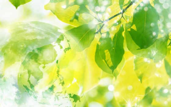 весна, sun, природа