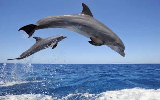 небо, море, world, дельфины, animals, брызги, underwater, дюймов,