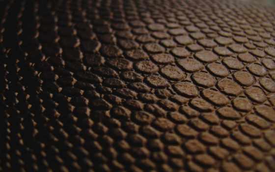 skin, текстура, макро, браун, black, коричневая, шороладный, переход,