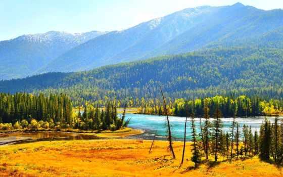 медитация, музыка, relaxing, осень, mountains, trees, сеть, дерево, pentru,