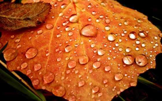 deviantart, осень, sui, vision, дождь, листья, джин,