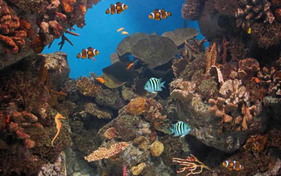 live, fish, ocean, живые, coral, океанов, риф, android, apk,