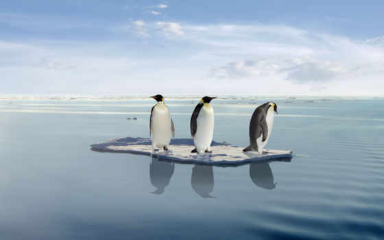 global, warming, penguins, пингвин, stock, три, melting, лед,