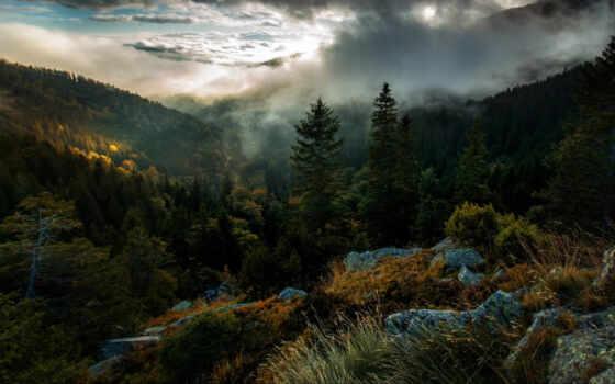 природа, fore, дерево, landscape, mobile, areal, зелёный, leaf, mist