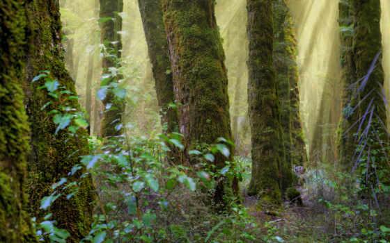 лес, стволы