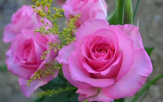 розовая, roza, капли