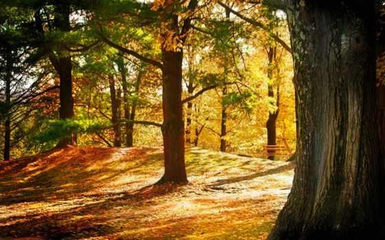 осень, цитата, сообщения