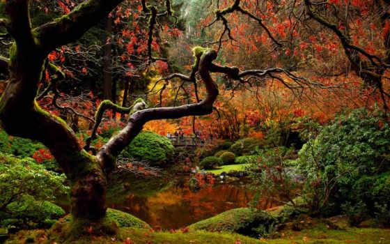 garden, japanese, осень