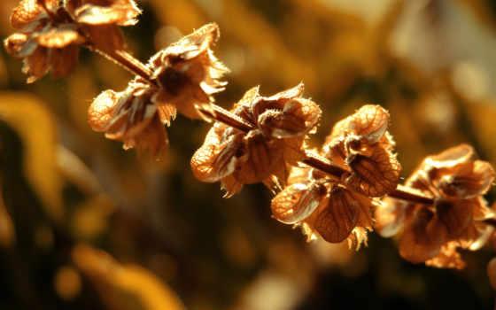 растение, dry, branch, капли, cvety, рейтинг, кб, дата, прислал, просмотров, дек,